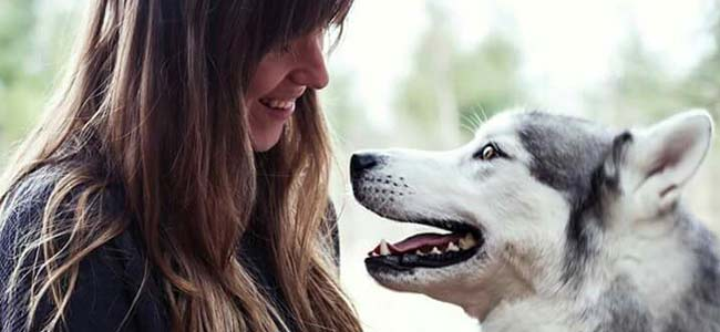 educateur-canin-cours-groupe-chien-montreal