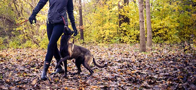 cours freestyle pour chiens montreal