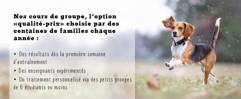cours groupe chiot