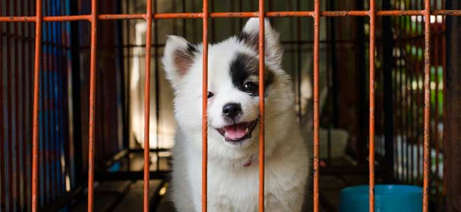cage chien chiot