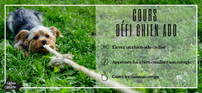 chien chiot cours groupe