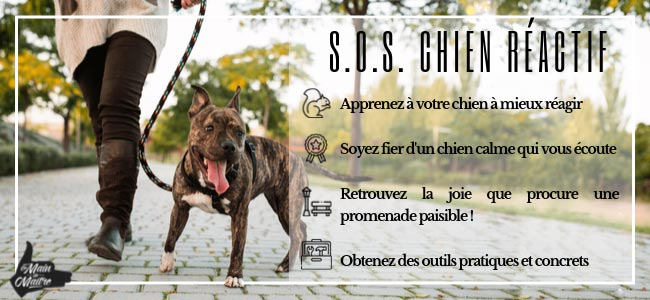 cours groupe chien montreal rive sud