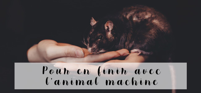 legislation-bien-etre-animal-quebec