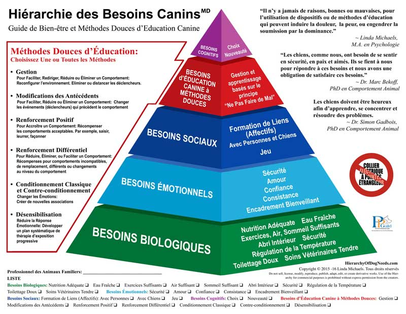 hierarchie des besoins canins