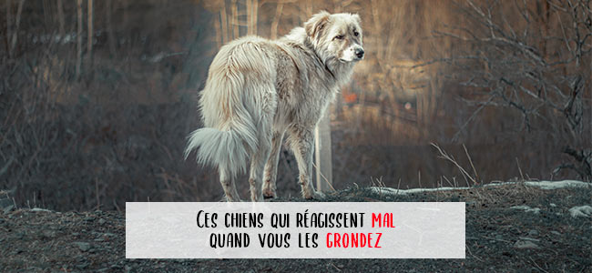 chien qui mord quand on le gronde